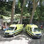 Videóra vették, ahogy kidőlt a magyar nő halálát is okozó fa Madeirán