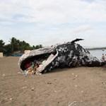 Évente 714 000 000 000 forintunk bánja, hogy ömlik a műanyagszemét az óceánokba
