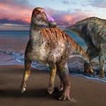 Eddig ismeretlen kacsacsőrű dinoszaurusz maradványait azonosították Japánban