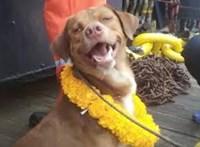 A tenger közepéről mentettek ki egy kutyát