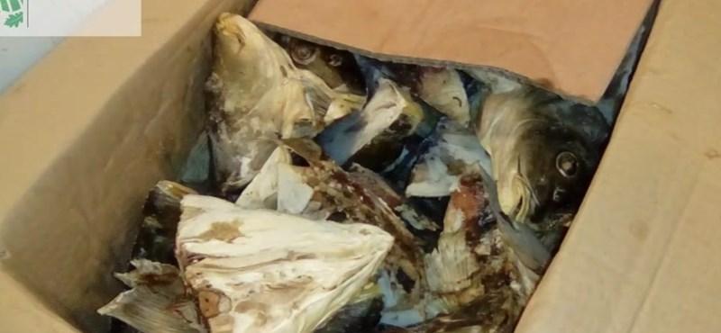 Reménykedjen, hogy nem innen vett fagyasztott halat - penészes hűtőházat kapcsoltak le