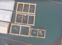 """Hiába ígérték az oroszok, mégsem engedték még szabadon a """"cetbörtönben"""" tartott delfineket"""