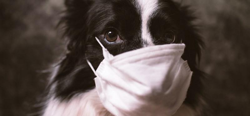 Durván terjed a legalattomosabb kutyabetegség