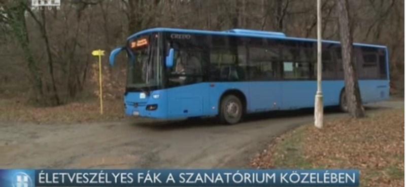 Életveszélyes fákra panaszkodnak a régi tüdőszanatórium közelében élők Pécsen