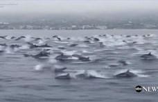 Hadseregnyi delfin tűnt fel Kaliforniánál, mintha menekülnének valami elől – videó