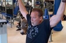 Arnold Schwarzenegger felvette a szamarát személyi edzőnek