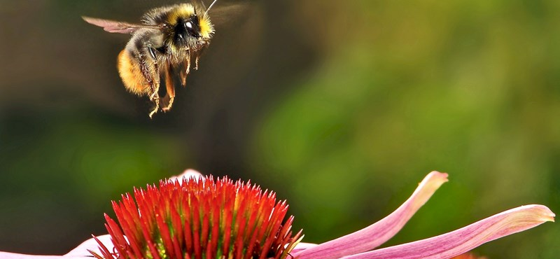 Elhallgattak a méhek a napfogyatkozás alatt