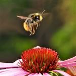 """Félti a méheket az RTL """"pénzügyi nagyragadozója"""""""