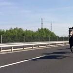 Szerencsés véget ért a lovas dráma az M6-oson