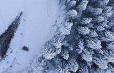Kivágták Svájc legmagasabb fenyőfáját, de előtte azért megölelgették – fotók