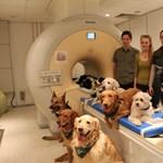 Beengedtek 13 kutyát az MRI berendezésbe, érdekes dologra jöttek rá az ELTE kutatói
