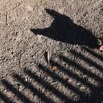 Több mint 100 ezer tyúkot ölnek le Bács-Kiskun megyében madárinfluenza miatt