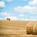 Mégsem kerülnek szövetkezeti földek állami tulajdonba