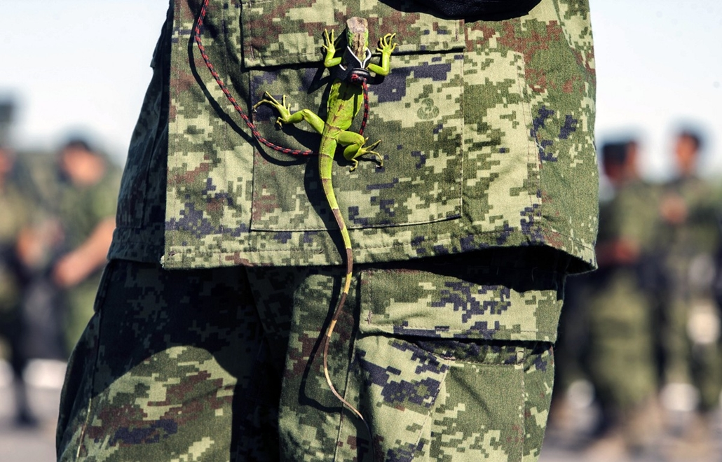 afp. hét képei - 2014.04.08. MEXICO, Monterrey : An iguana hangs from the uniform of a Mexican soldier during the burning of marijuana, heroin, cocaine and methamphetamine at a military base in Monterrey, Nuevo Leon state, on April 8, 2014. The Mexican Ar