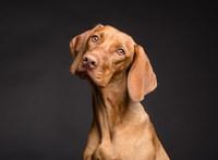 Új könyv jelent meg a kutyák történetéről
