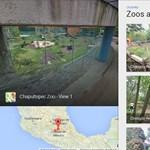 Nézzen pandamacikat a Street View-val