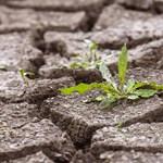 Súlyos aszályra kell felkészülnünk a száraz április után