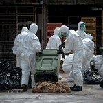 Madárinfluenza: Tajvannak sem kell már magyar baromfi