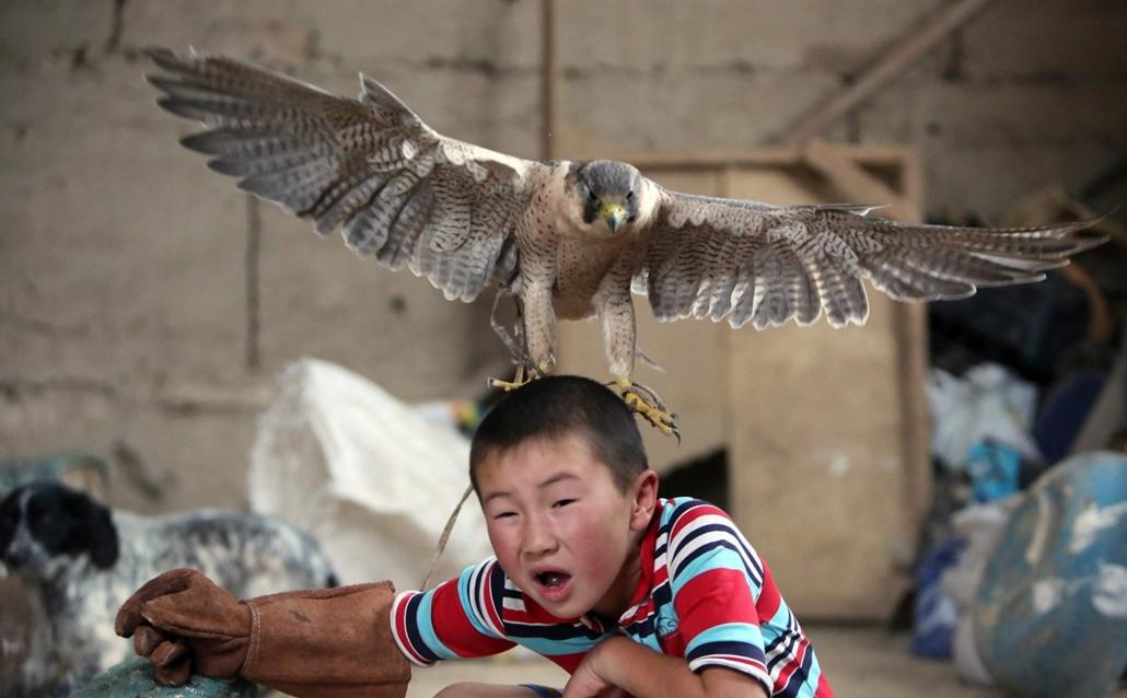 hét képei - 16.06.23. - A kirgiz Azat Sajbirov, fején egy fiatal sólyommal a kirgiz fõvárostól, Biskektõl mintegy 270 km-re fekvõ Bokonbajevóban 2016. június 22-én. A solymászat õsi hagyomány Kirgizisztánban, a fiú családjával és madariakkal a Salburun ne