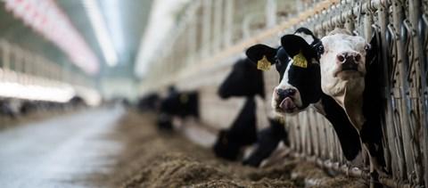 A mezőgazdaságot is sújtja a járvány, de az élelmiszer-ellátás nincs veszélyben