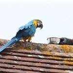 Csúnyán beszólt a papagáj a megmentésére siető tűzoltóknak