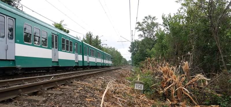 Kilométereken át megcsonkították a fákat a HÉV vonalán