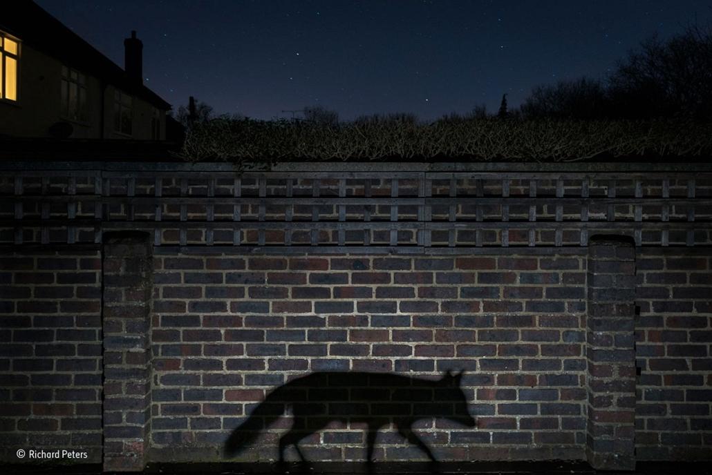 NE HASZNÁLD!!!!!!!!! - Wildlife Photographer of the Year, Richard-Peters- Urban