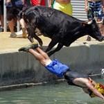 Fotó: az emberek az életükért futnak, a bikák a halálba