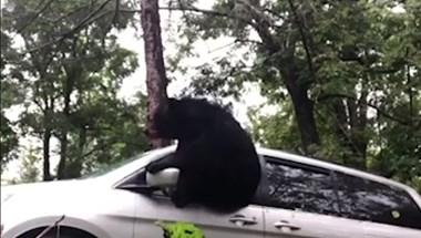 Közeledett az autójához a sofőr, amikor rádudált a medve - videó