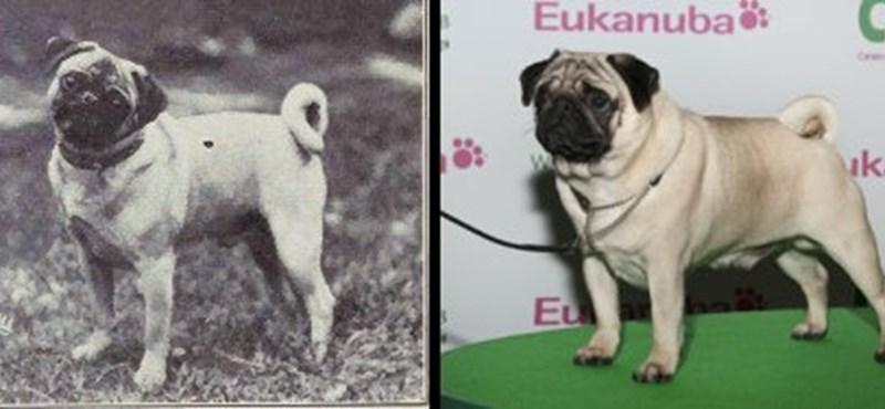 Az eBayen árverezett el egy kutyát egy német város, a vevő perel