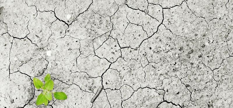 """""""2100-ra az év legforróbb napjait nem lehet majd túlélni klíma nélkül"""""""