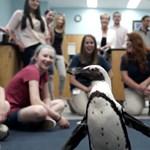 Megható videó: gyerekek mentették meg egy pingvin lábát 3D-nyomtatással