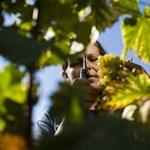 Mi a baj a magyar borral Ausztráliában?