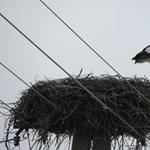 Fotó: megérkezett az első gólya az országba