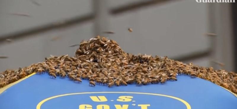 Óriási méhraj fenyegette egy New York-i utca lakóit – videó
