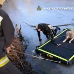 Rémült labradort mentettek a tűzoltók a péceli Csunya-tó közepéről – videó