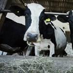 A Gici Tej tartozik a gazdáknak, az agrártárca ingyenhitelt kínál átmeneti megoldásként