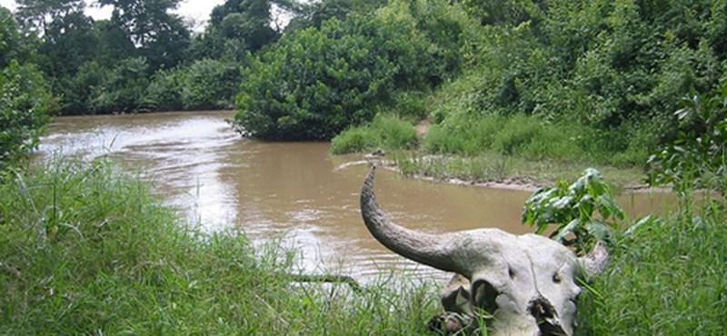 Különleges vadság Kongóban