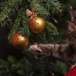A mai nap érdekessége: így alakult a karácsonyfa története