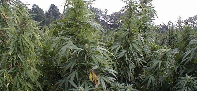 Nevadában is legalizálták a marihuánát. Egymilliós hétvégi adóbevétel