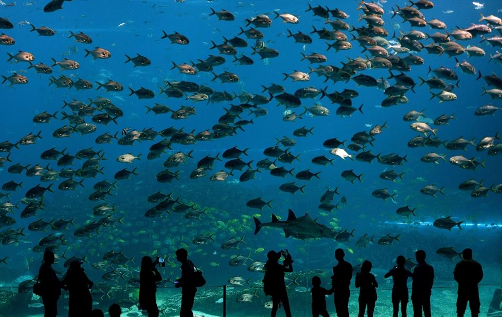 afp. 16.04.29. A világ legnagyobb üvegfelülete előtt állnak turisták a A Hengqin-szigeten, a kínai Zhuhaiban, amely akváriumként funkcionál.