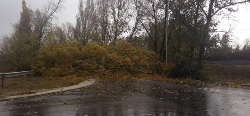 Hatalmas fa dőlt egy budapesti főútra
