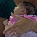 Terjed a zika-láz:Guatemalában több mint száz fertőzött van, Venezuelában pedig súlyos szövődményekkel jár a betegség