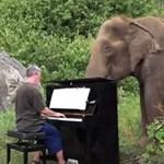 Imádja ez a vak elefánt, ha zongoráznak neki (videó)