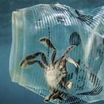 Jött egy fotó, ami elég jól bemutatja, miért baj, ha a műanyagok a vizekbe kerülnek