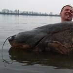 Száz kilót közelítő óriásharcsát fogtak a Balatonból