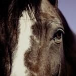 Égő pajtából mentettek lovat a karcagi rendőrök