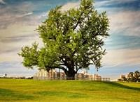 Az 1000 évig élő fa titka az, hogy egyszerűen nincs beprogramozva az öregedésre