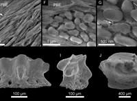 38 millió éves baktériumokat találtak a bécsi tudósok