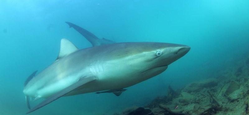Eltűnhet a cápafajok fele a Földközi-tengerből